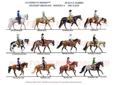 english pattern races western dressage movements courtesy of http www