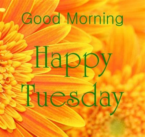 imagenes de good morning tuesday 801 best images about day of the week quotes on pinterest