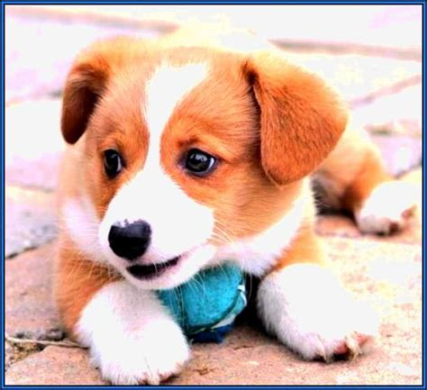 best house dogs medium size best house dogs medium size 28 images 37 best medium sized photos of popular