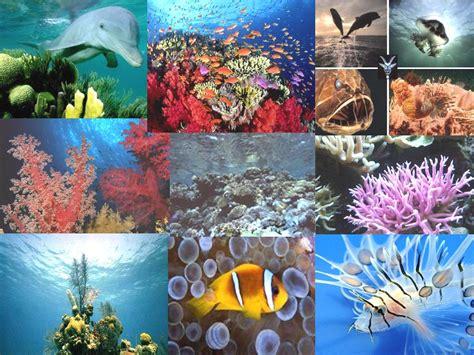 imagenes de la vida marina biodiversidad vida marina