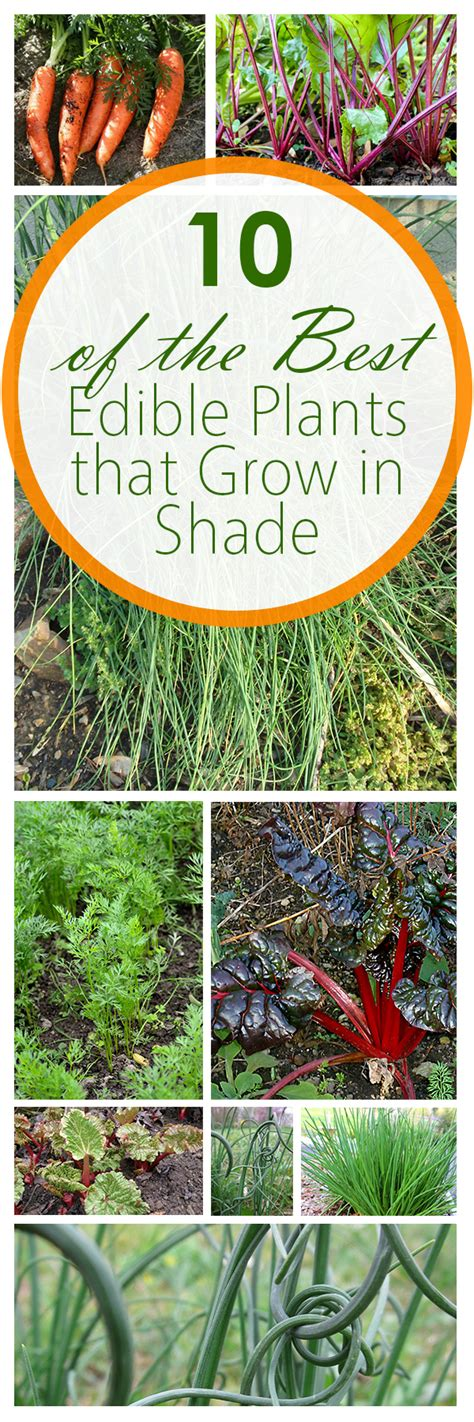 10 of the best edible plants that grow in shade bees and