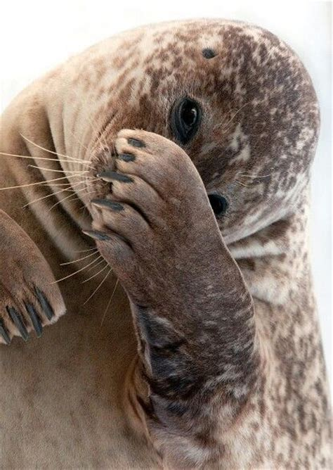 Is Really Bashful by Bashful I The Looks That Different Animals Give We