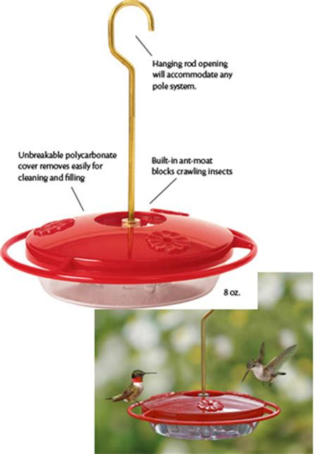 How To Keep Ants Away From Hummingbird Feeder birds unlimited how to keep bees and ants away from the hummingbird feeder