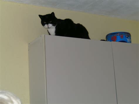 how to stop from jumping on table how do i stop my cat from jumping on the table poc