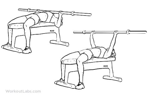 is bench press good for chest barbell bench press chest press workoutlabs