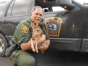 deputy wildlife conservation officers from the field