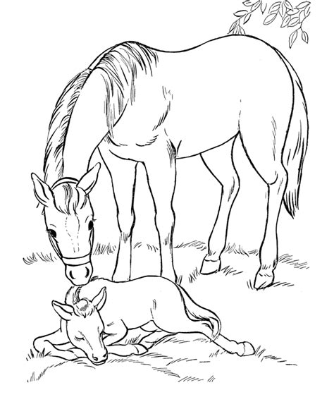 Coloring Pages Of Horses And Foals by Coloring Page Mare And Sleeping Foal