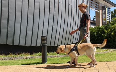 how are guide dogs trained guide mobility instructors guide dogs wa