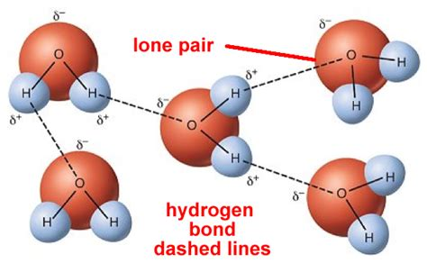diagram of water molecule related keywords suggestions for hydrogen bond diagram
