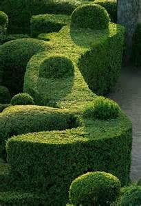 choosing the best plants for hedges garden yard