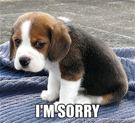 Im Sorry Memes - i m sorry so sad puppy quickmeme