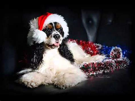dogs singing jingle bells jingle bells dogs and cats sing songs dogs and cats and