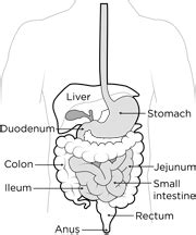 what is the first section of the small intestine 91 the first section of the small intestine is called