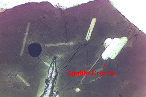 apatite thin section apatite