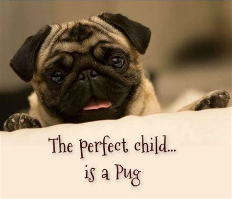 pugs with children 15 pugs of the day