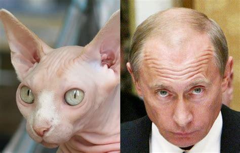 Look Like A by A Laugh Putin Looks Like A Saboteur365