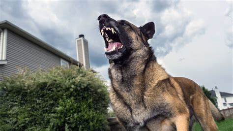 how to stop dogs from barking how to stop a from barking and driving you bonkers realtor 174
