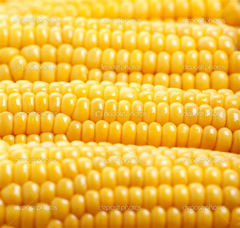 2016 Corn HDQ Wallpapers, HQ Definition Backgrounds #48RDT