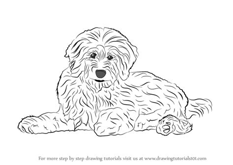 Learn How To Draw A Goldendoodle Dogs Step By Step