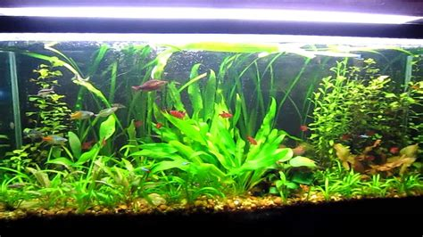 Tips and Tricks to successful Aquascaping (Freshwater