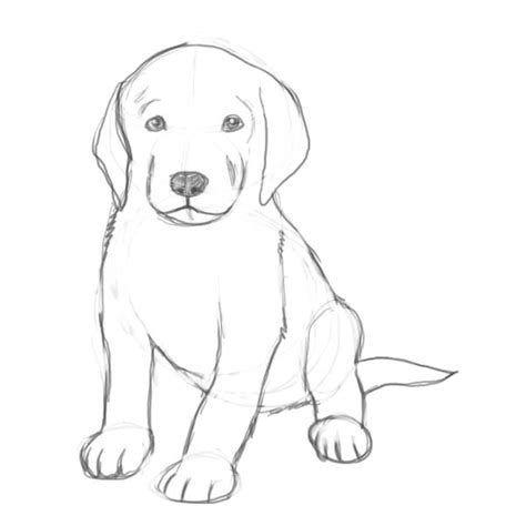 how to draw a puppy how to draw a puppy drawing drawings drawing ideas and sketches