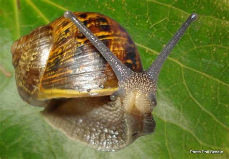 Slugs In Garden by T E R R A I N Taranaki Educational Resource Research