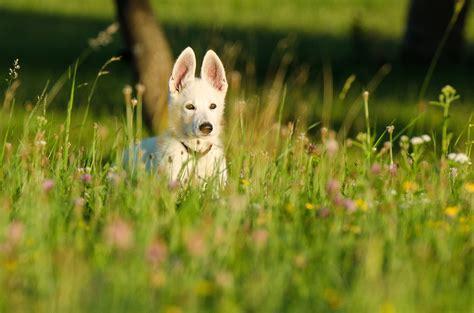 rabbit dogs let s pretend edition trudog 174