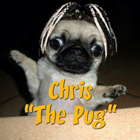 lol pugs chris quot the pug quot lol nsync