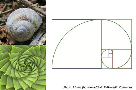 number pattern found in nature sunflower the fibonacci sequence golden section car