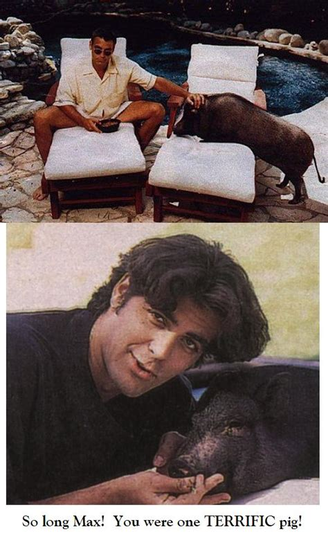 George Clooney Mourns His Dead Pig by George Clooney S Pig Pig