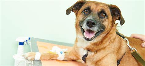 seizures  dogs  common reasons  seizures