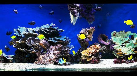 marine tank aquascaping how to aquascape a saltwater aquarium aquarium care