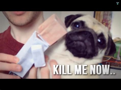 dantdm ellie the pug pug hates dr trayaurus the mine cart pug