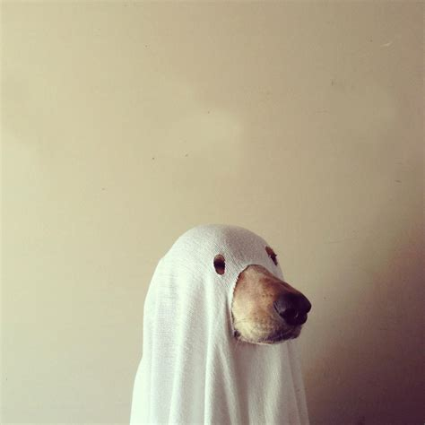 ghost puppy ghost pictures photos and images for and