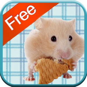 hamster apk hamster apk for kindle android apk apps for kindle