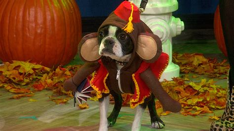 wrecking pug costume costume pug wallpaper