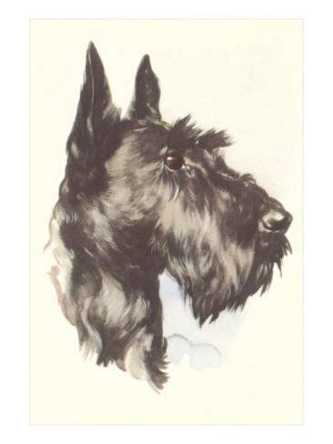 scotty dogs scottie