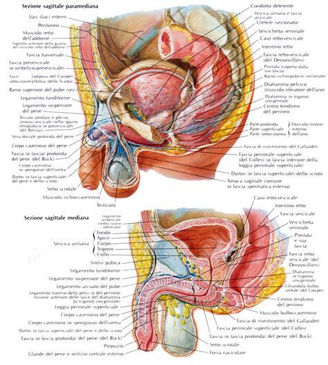 ragade anale interna foto rapporti della vescica urinaria medicinapertutti it