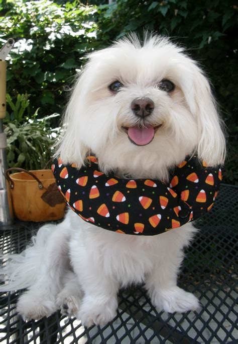 when to a puppy puppy bumpers puppy bumpers keep dogs from getting out of fences
