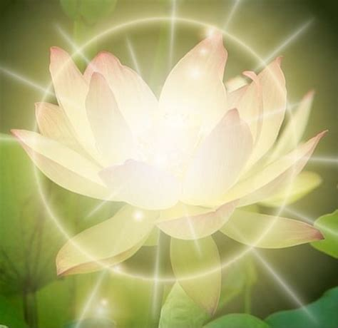 Lotus Healing Spiritual Healing Is Knowing That The Is Perf By