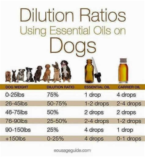 essential oils for dogs essential dilution ratio for dogs also keep in mind your s sensitivity
