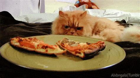cat   day hangover  wine binge