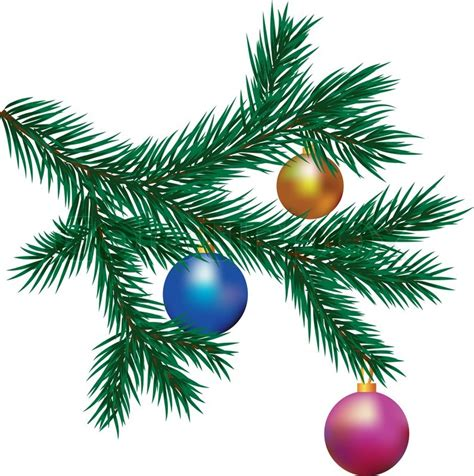 christmas tree branch stock photo colourbox