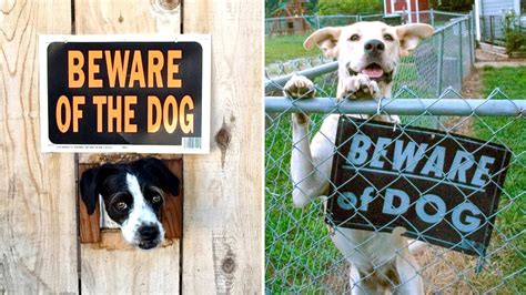 beware the dog house the terrifying dogs lurking behind quot beware of the dog