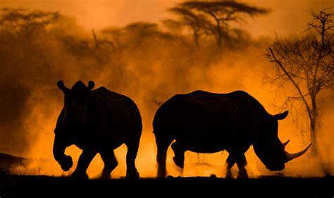 best wildlife photography 10 things to think about in order to master wildlife