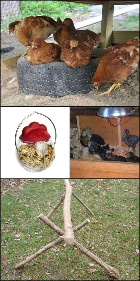 Backyard Chickens Toys 10 Toys For Your Backyard Chickens Chickens To Get