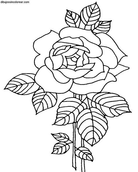 imagenes de rosas sin pintar dibujos de flores para colorear