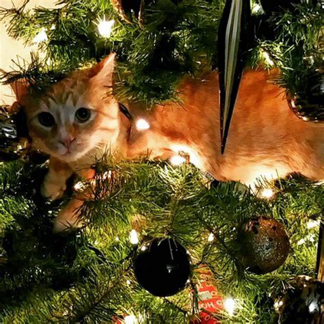fotos arbol de navidad fotos de gatos obsesionados con el 225 rbol de navidad