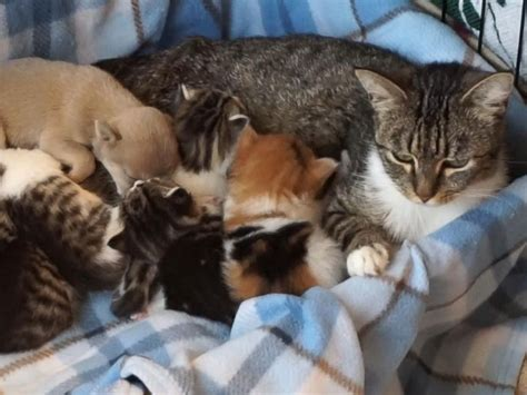 Litter Of Kitties by Orphaned Puppy Adopted By Cat And Litter Of Kittens