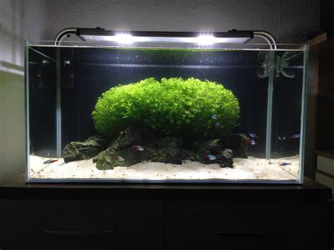 aquascaping forum vorstellung meiner becken aquarienvorstellung